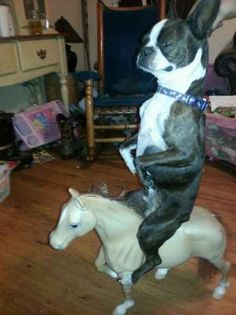 Whatever is happening here.   The 40 Most WTF Animal Pics Of 2013