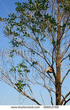 bird nest home on the tree.