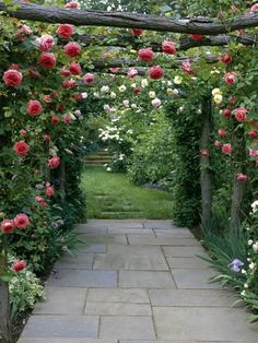 Discover which fragrant climbing plants will work best for your arch or pergola with these gardening tips from HGTV.com
