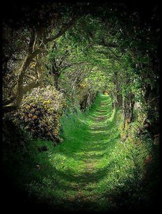 Ireland tree tunnel- so pretty It looks like ypou're following the white rabbit to wonderland.