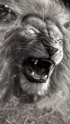 Leones Leones b dazzle piercing - Piercing Lion Tattoo Design, Lion Design, Lion Wallpaper, Animal Wallpaper, Big Cats Art, Cat Art, Logo Lion, Lion Photography, Lion Love