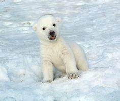 Toronto Has the Cutest Baby Polar Bear. Ever.