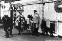 Titanic Fact #13:  There were a total of 10 dogs on board ship - all of them belonging to first class passengers.