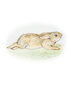The Story of a Fierce Bad Rabbit - And it sees the bad Rabbit tearing past— without any tail or whiskers!