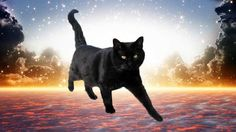 Lisa suggested I do some energy healing for Furball. Black cat by Shutterstock