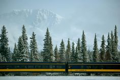 Alaska is home to many wild and wonderful sights. From remote gold prospecting towns, to vast expanses of barely populated wilderness, to soaring mountains. But one of its smallest treasures is also one of its most unusual - a town with a population of just over eight hundred, who have had a cat fo