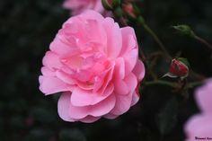 Flower 20 by Mohammad Azam