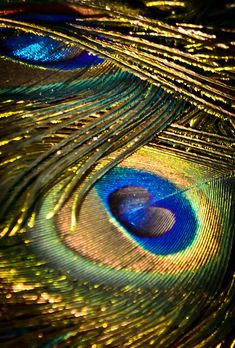 Peacock detail - eye feathers in 2019 Peacock Decor, Peacock Colors, Peacock Art, Peacock Feathers, Peacock Logo, Peacock Images, Peacock Pictures, Feather Wallpaper, Lord Krishna Wallpapers