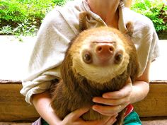 An Inside Look At What It's Like To Be Surrounded By Sloths - -  click the pic to see lots of cute sloth pictures!