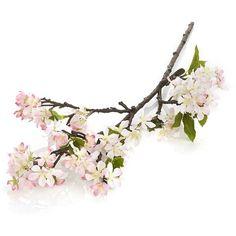 Crate & Barrel Light Pink Cherry Blossom Stem ($13) ❤ liked on Polyvore featuring home, home decor, floral decor, flowers, filler, backgrounds, flower stem, crate and barrel, cherry blossom home decor and flower home decor