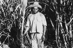 Australia still slow to remember its South Sea Islander heritage and industry it helped create - Curious North Coast NSW - ABC News (Australian Broadcasting Corporation) Australian Curriculum, North Coast, South Seas, Abc News, Black History, Gallery, Create, Roof Rack