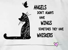 Angels have whiskers