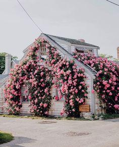 resim, isabella tarafından keşfedildi. We Heart It'de kendi görsellerinizi ve videolarınızı keşfedin (ve kaydedin)! Nantucket Home, Nantucket Island, Dream Garden, Home And Garden, Garden Homes, New England Travel, Coastal Gardens, Flower Aesthetic, Spring Aesthetic