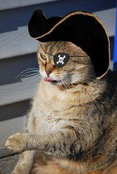 Out of men? Send in the cat? by Dazzelpoint-Photos.deviantart.com on @deviantART