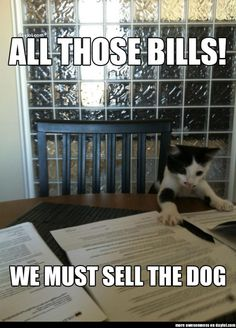 Financial Planning Cat