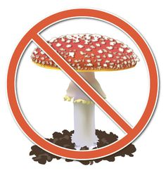 how to know if a mushroom is safe to eat