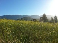Smallholding, lifestyle and irrigation farm for sale around Robertson in the Cape Winelands district of the Western Cape of South Africa. Irrigation, South Africa, Westerns, Cape, Mountains, Lifestyle, Pictures, Travel, Outdoor