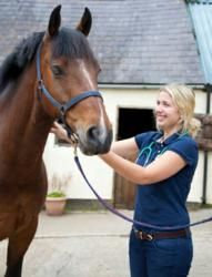 Globe University-Woodbury is now enrolling for the Associate in Applied Science degree in animal and equine science . This program covers everything you need to know about horses and other large agriculture animals. This new program is not like the