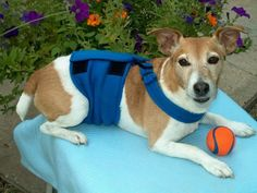Male Dog Diaper Belly Band Wrap with Nonslip by happyjackwraps