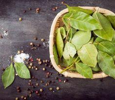 Bobkový list je obľúbený hlavne pri varení ako dochucovadlo, ale využiť ho možno aj inak