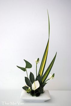 images of ikebana flower arrangement Contemporary Flower Arrangements, Tropical Flower Arrangements, Creative Flower Arrangements, Beautiful Flower Arrangements, Flower Centerpieces, Flower Vases, Flower Decorations, Beautiful Flowers, Ikebana Arrangements
