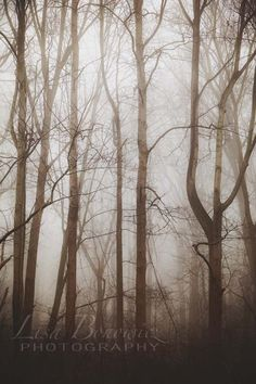 Fog in Forest - Nature Photography
