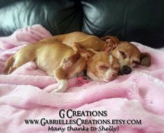 Pink Heart Dog and Cat ID Tag  Glow in the by GabriellesCreations