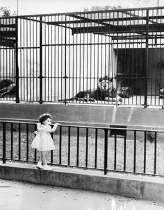 AUDUBON ZOO, 1958 That could be me. That's how old I would have been and went there often.