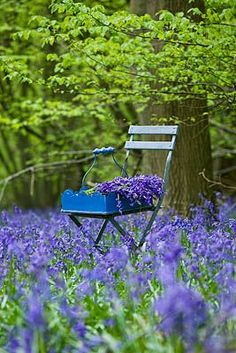 I love bluebells they remind me of the english woodlands Lavender Blue, Lavender Fields, Lavander, Provence, Blue Garden, Dream Garden, Lavender Garden, Beautiful Gardens, Beautiful Flowers