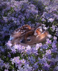 "Best Earth Pics on Twitter: ""Fawn getting cozy https://t.co/ATiW06EiRu"""