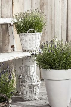 wit - potten - manden - planten - white - plants - baskets