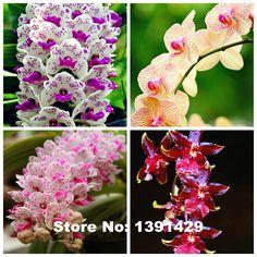 Hot Sale!!! 100pcs 22 colors Rare Cymbidium orchid, African Cymbidiums seeds, bonsai flower seeds, plant for home garden,