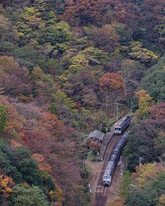 坪尻(つぼじり)駅は山や川に囲まれ秘境駅のひとつです。坪尻(つぼじり)駅付近の山が紅葉すると、まるで紅葉に囲まれているかの様な気分になります。土讃線(どさんせん)に乗ったときに見てみてはいかがでしょうか。