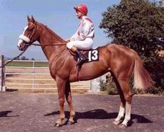 2000 Guineas winner Nebbiolo (IRE)