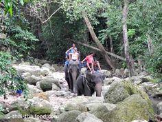 Elefanten Tour auf Koh Samui Koh Samui Thailand, Strand, Animals, Elephants, Animales, Animaux, Animal Memes, Animal, Animais
