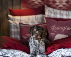 Striped Bedblanket with a cute dog. Happy Holidays! Lexington Company Holiday Home Collection 2016 has arrived. Get home interior inspiration for the Holidays and Christmas on www.lexingtoncompany.com.