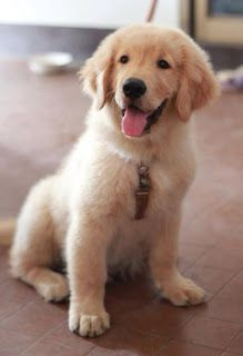 Most Famous Golden Retriever Names Click the picture to read
