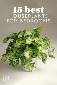 Want to know the best houseplants to grow in your bedroom. This list of the perfect houseplants for bedrooms is full of plants that will help you sleep and thrive in your space.