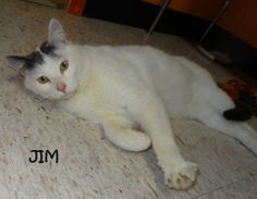 UPDATE-ADOPTED!  AVAILABLE 4/7! STRAY Tag# 29522-1 Name is Jim  White/Gray  Male-not neutered  Sweet cuddle bug!! Likes to play!  https://www.facebook.com/photo.php?fbid=616802898390533&set=a.616802768390546.1073741989.267166810020812&type=3&theater