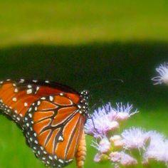 Butterfly ❤❤❤❤❤
