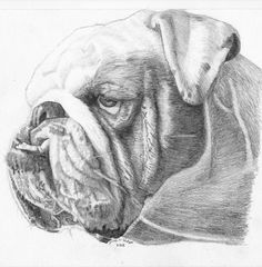 One of a Kind Original Pencil drawing of a by Jamesdrawings, $60.00