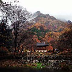 내장산 백양사 South Korea, Mountains, House Styles, Nature, Travel, Image, Beautiful, Fall, Autumn