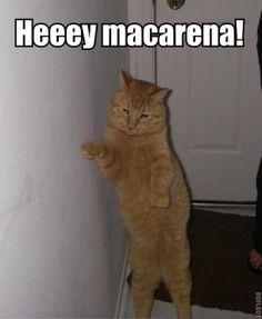 heey macarena!