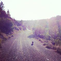 Shitzu-walking alone Walking Alone, Shih Tzu, Country Roads
