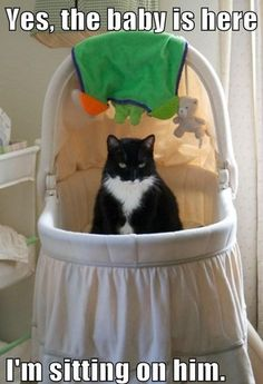 This is how my cat was when my son was born, he was used to being the baby, he did try to sleep in the crib, then in the kitchen, he looked straight at me and peed on the floor. He did accept him though eventually.