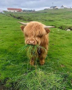 Look at this cute highland cow! Baby Farm Animals, Baby Cows, Baby Animals Pictures, Cute Little Animals, Cute Animal Pictures, Cute Funny Animals, Animals And Pets, Baby Elephants, Wild Animals