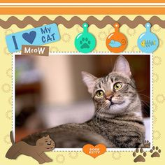 Image result for cat scrapbooking layouts