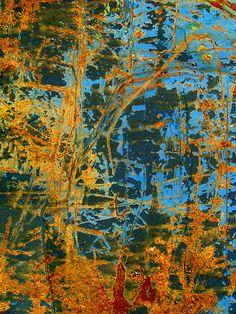 rust forest | Darrin | Flickr