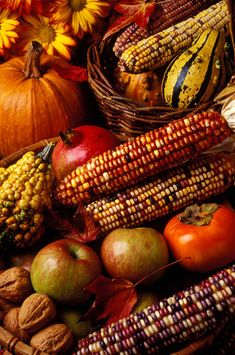 Autumn harvest ~For skin care products that last for many seasons, shop here now