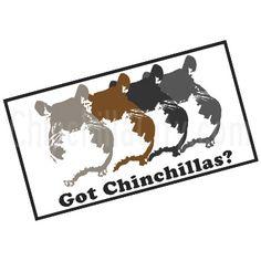 Got Chinchillas?